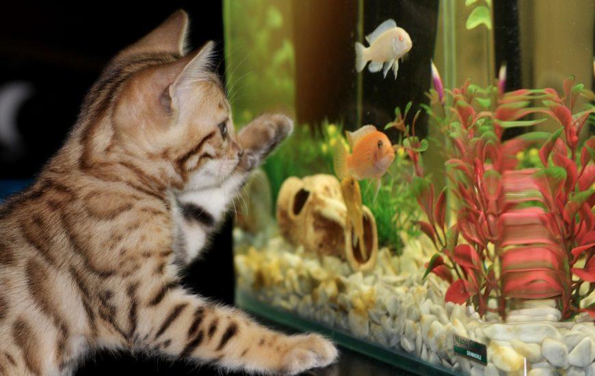 Comment déplacer un aquarium