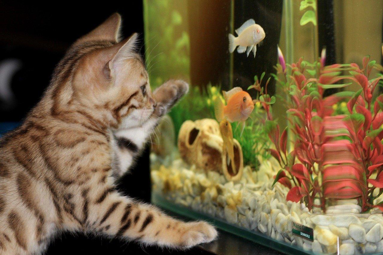 Comment déplacer un aquarium en 8 étapes